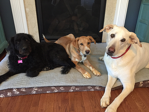 Molly, Toby and Chrissy love to hang together at almost all times. They are definitely three peas in a pod! They can often be found all under owner Jenn Southan's (customer experience director) desk during the work day, making sure that the Customer Experience remains something to howl about.