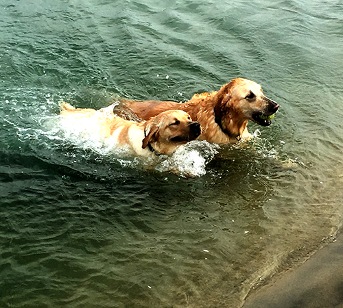 Jennifer Steinker's (customer support) Milo and Kona at the Newport Beach dog beach for a quick workout!