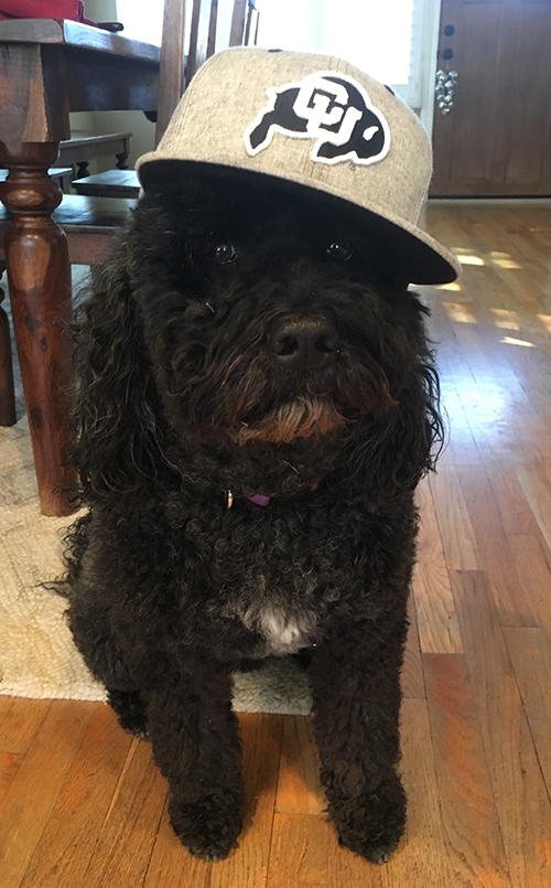 Sammy, a Portuguese Water Dog, but really the Ewok Dylan Frusciano (VP of sales) always wanted as a kid