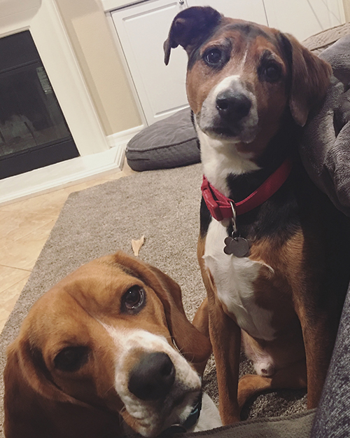 """Beth Hazen's (account manager) fur babies, Bogey and Lola. Bogey used to rule the house ... until """"she"""" came. They truly are the best of friends though."""