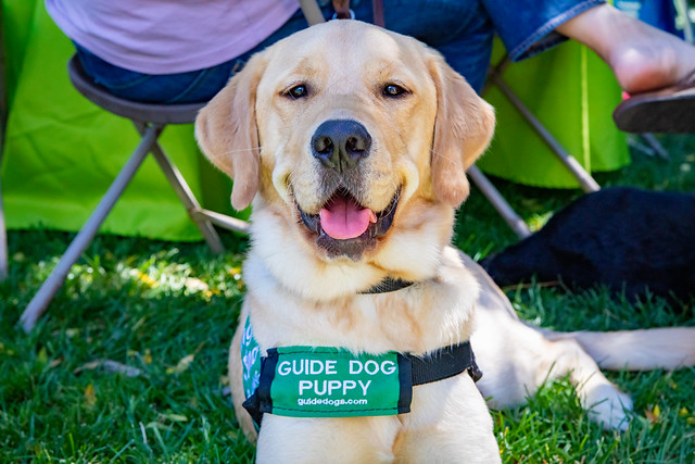 TeamSnap and Guide Dogs for the Blind: Raising Puppy Heroes